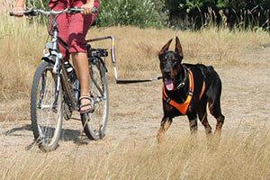 U-образный велоспрингер для собак