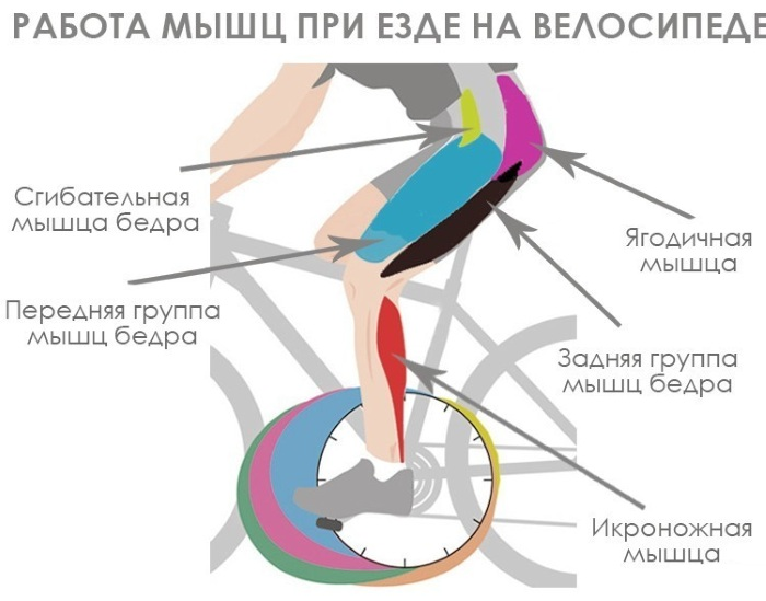 Проработка задействованных групп мышц